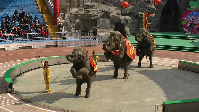 Elephant performance, China