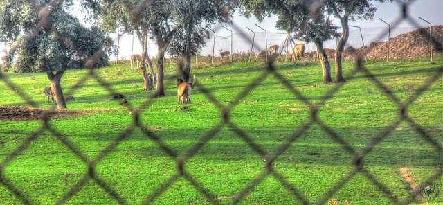 2014_11_22_Aldea_del_Fresno_001
