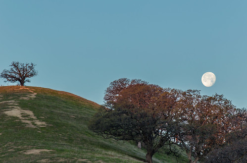 california trees moon sunrise landscape hiking hills bayarea eastbay sfbayarea antioch moonset ebrpd contracostacounty eastbayregionalparkdistrict marccrumpler ebparksok