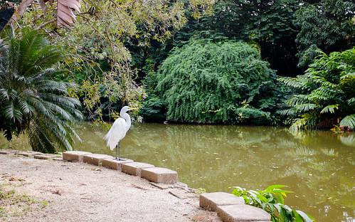 naturaleza bird nature water pond agua fuji puertorico sanjuan pr fujifilm upr jardínbotánico caguas x100s