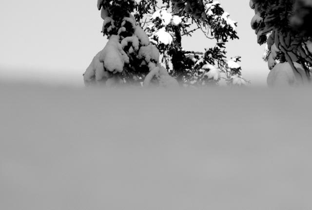 Winter 2015_11
