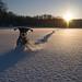 backlight snow dog by s☼vraskin_k