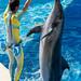 150216 Enoshima Aquarium-26.jpg