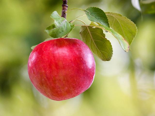 Apple1