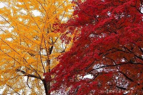 2014京阪神之旅-南禪寺2242 001