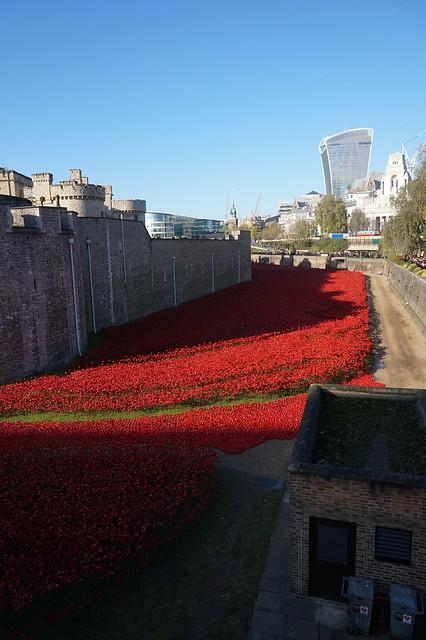Poppies November 2014