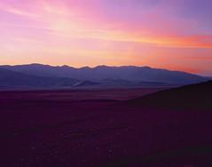 Purple plains