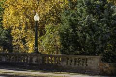 Maple Avenue Lamp Posts