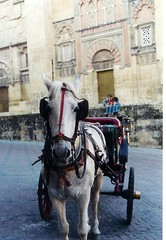 pack animal(0.0), coachman(0.0), vehicle(1.0), bridle(1.0), horse tack(1.0), horse(1.0), horse harness(1.0), horse and buggy(1.0), land vehicle(1.0), carriage(1.0),