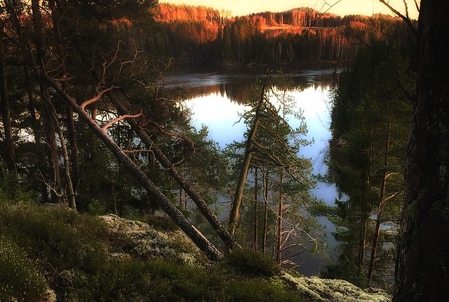 iphone6plus: Along an elk trail in a Norwegian forest. Spydeberg, Norway