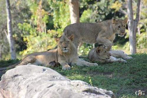 Zoo Miami 14.11.2014 16