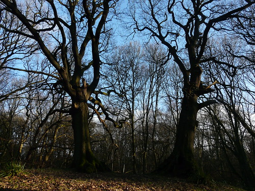 Two Tree Hill, Hampstead Heath