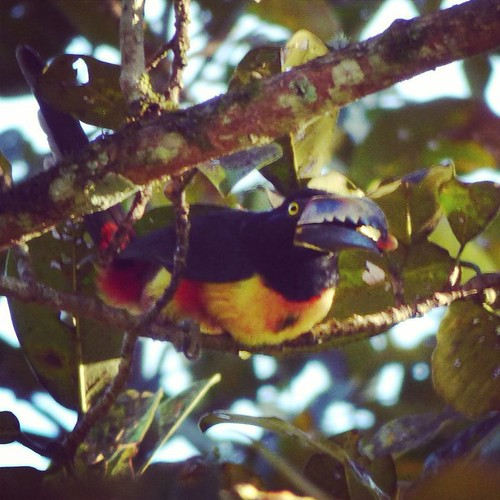 Bird watching in Nicaragua