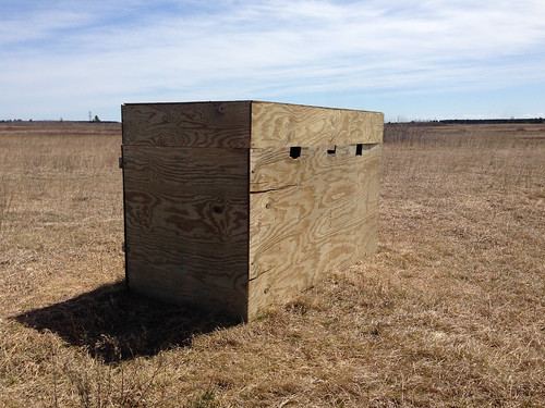Sharp-tailed Grouse Observation Blind