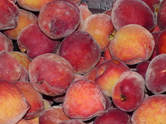 starr-160408-0718-Prunus_persica_var_persica-fruit_harvest-Hawea_Pl_Olinda-Maui