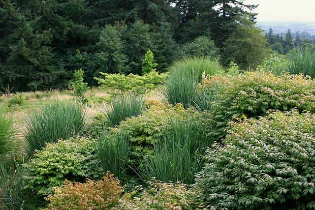 40_grasses