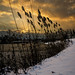 Winter sunrise through the reeds by buffcleb