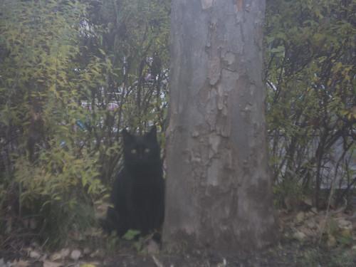 test cat