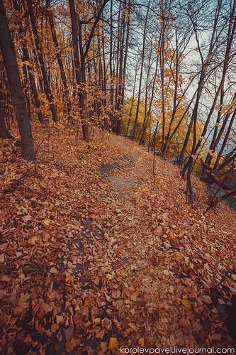 Autumn-233