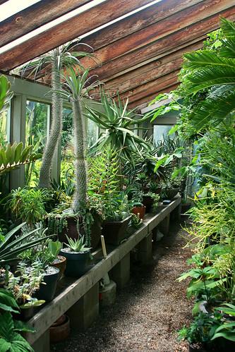 13_greenhouse