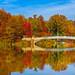 Fall Foliage Central Park New York City - Bow Bridge November 2014 by Anthony Quintano