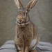 The Magical Hare