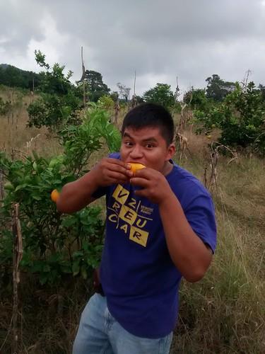 Yumy yumy fresh orange!!!