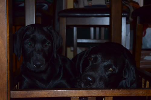Brie & Rye