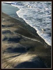 sand & sandpiper