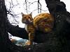 sari kedi