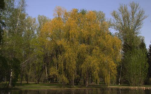 park russia ekaterinburg yekaterinburg россия екатеринбург урал