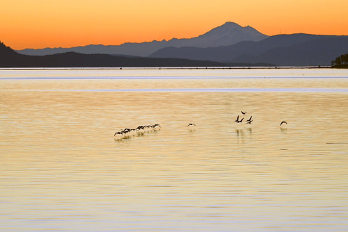 morning sea canada reflection bird wet water silhouette sailboat sunrise island dawn islands coast boat fly geese am nikon flickr day waves sailing bc yacht britishcolumbia tide flight silhouettes wave vancouverisland coastal birdsinflight coastline washingtonstate tidal sidney mountbaker canadagoose canadageese goldenhour mtbaker skein d800 firstlight moored gaggle thegoldenhour paulwilliams lowlightphotography sidneybritishcolumbia sidneybc nikon70200mm nikkor70200mm sidneybythesea nikond800 mountbakerusa sdail despitestraightlines mtbakerusa mountbakerwashingtonstate ilobsterit askeinofgeese
