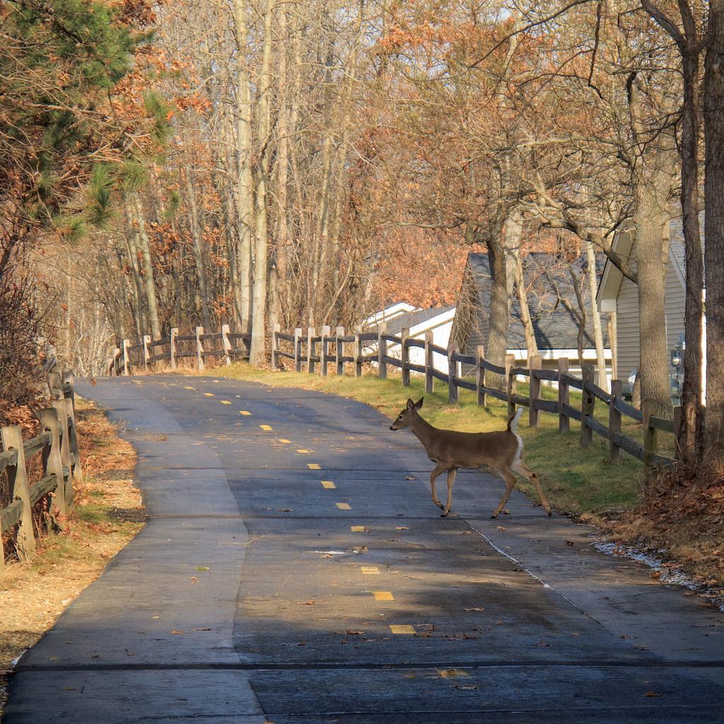 Oak Brook Estates Mobile Home Park