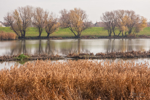 autumn hungary bank part magyarország ősz mezőtúr gát tiszántúl keletmagyarország hortobágyberettyó