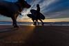 Giant Dog Photobomb! IMG_9891