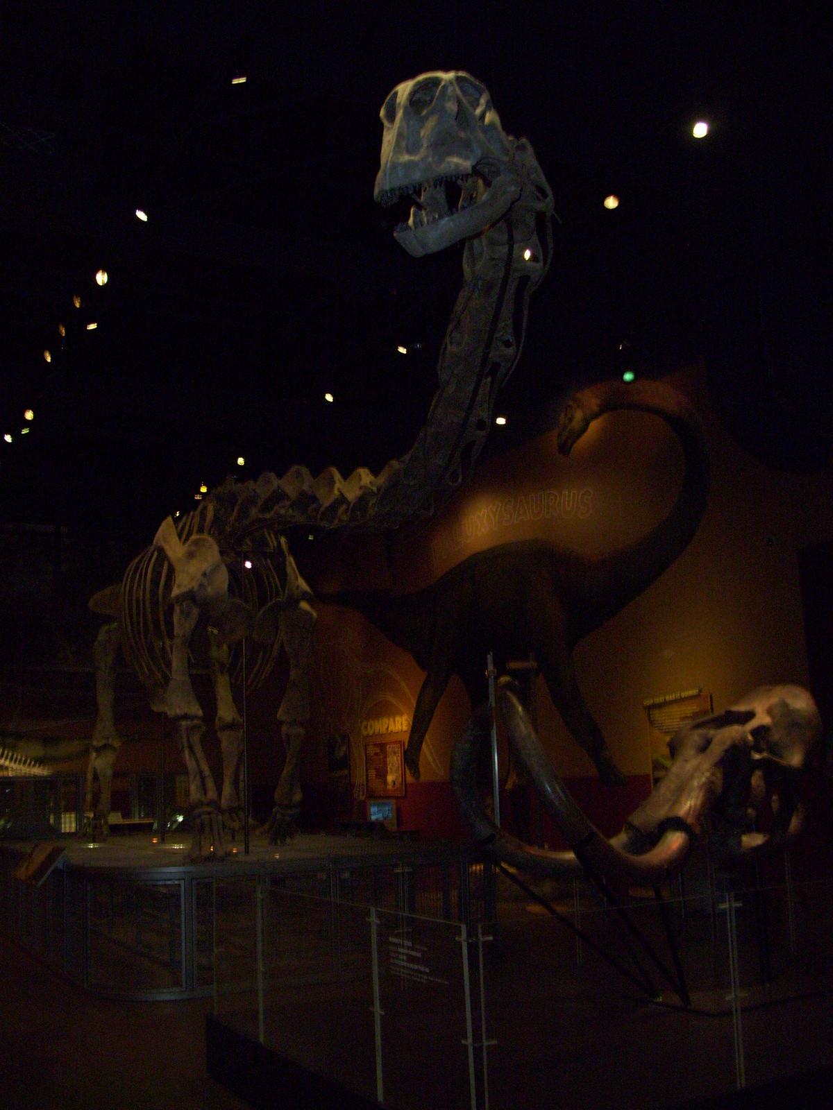 FWMSH: Dinosaurs