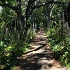 #Forest #path in #citypark #FreemansBay #Auckland