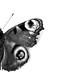 butterfly anatomy by Marta Michalowska