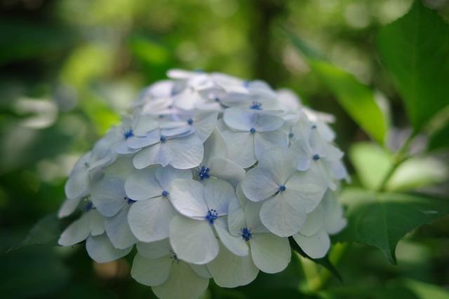 2016/06/18_郷土の森-28