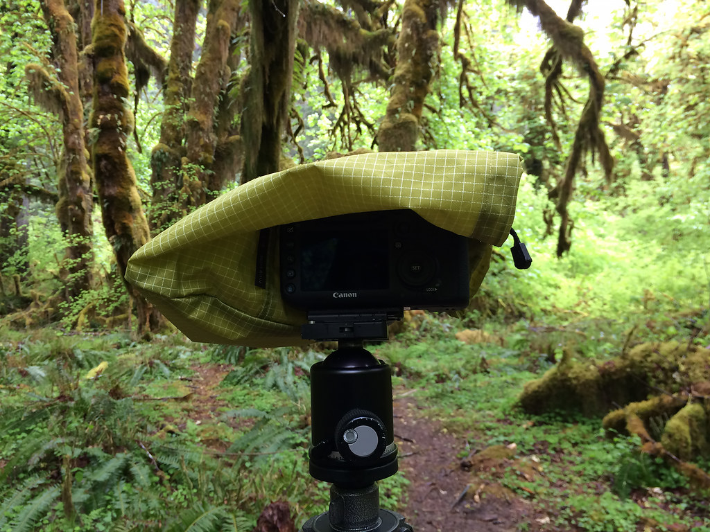 My camera and lens covered by a Tom Bihn Stuff Sack to keep them dry during a rainy hike in the Hoh Rain Forest