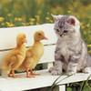 Animal Cute Kittens Cute HD Desktop Wallpapers #41