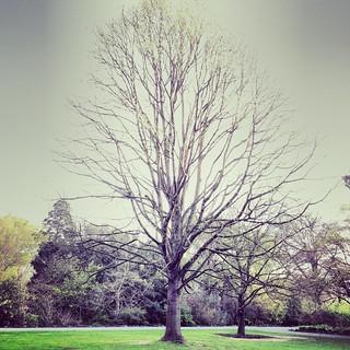 alberi_in_parco