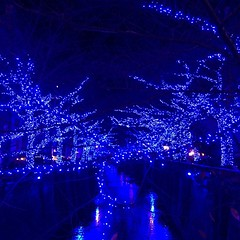 Illumination #christmas in #japan