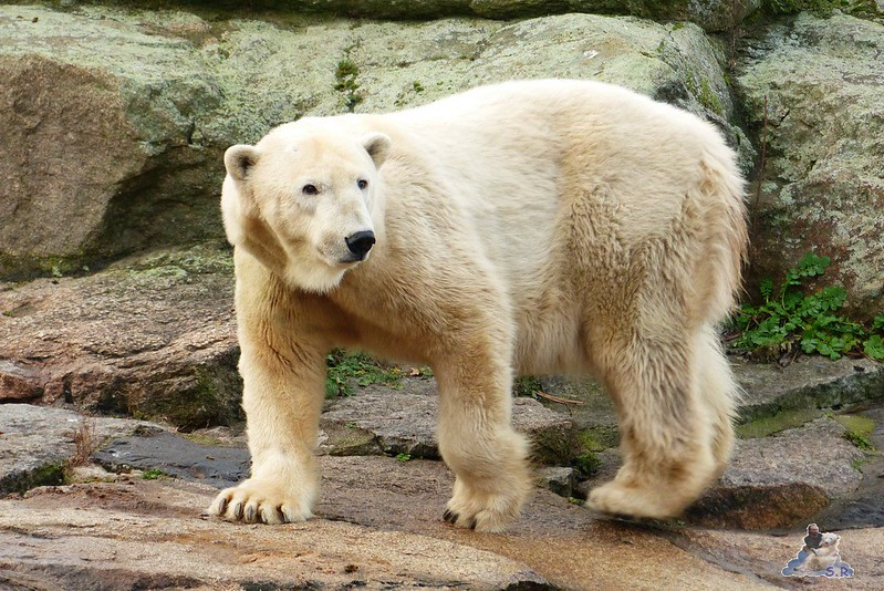 Zoo Berlin 07.12.2014 21