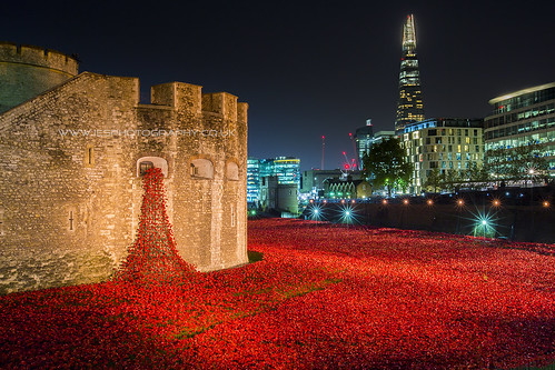 London Poppy Display at The Tower of London at Night