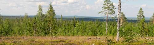 summer sol forest finland geotagged july lapland fin lappi 2014 savukoski 201407 20140721 geo:lat=6737482065 geo:lon=2794733047 kivitunturintie