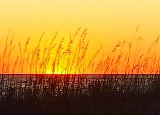 North Carolina beachgrass, sunset, sand dunes,