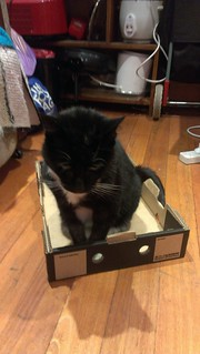 Squeak in a box