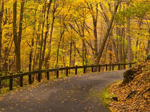 road autumn trees fall leaves landscape ma massachusetts newengland olympus omd mountholyoke em5 45mmf18mzuiko