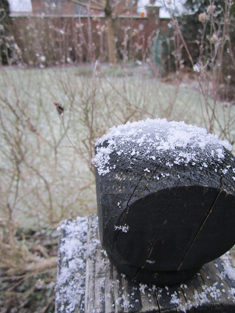 first snow of 2015 (10)